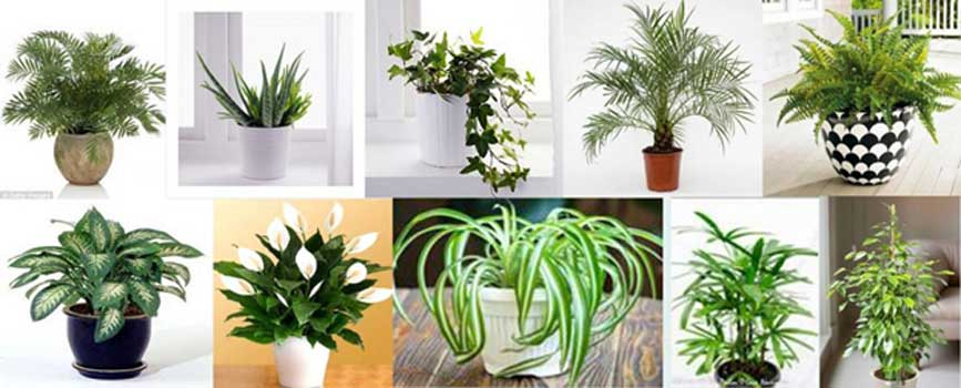 Ornamental plants to place indoors